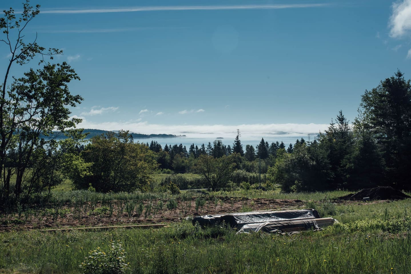 In the pasture overlooking the vegetable garden and the salt water bay. A close walk from the tipis!