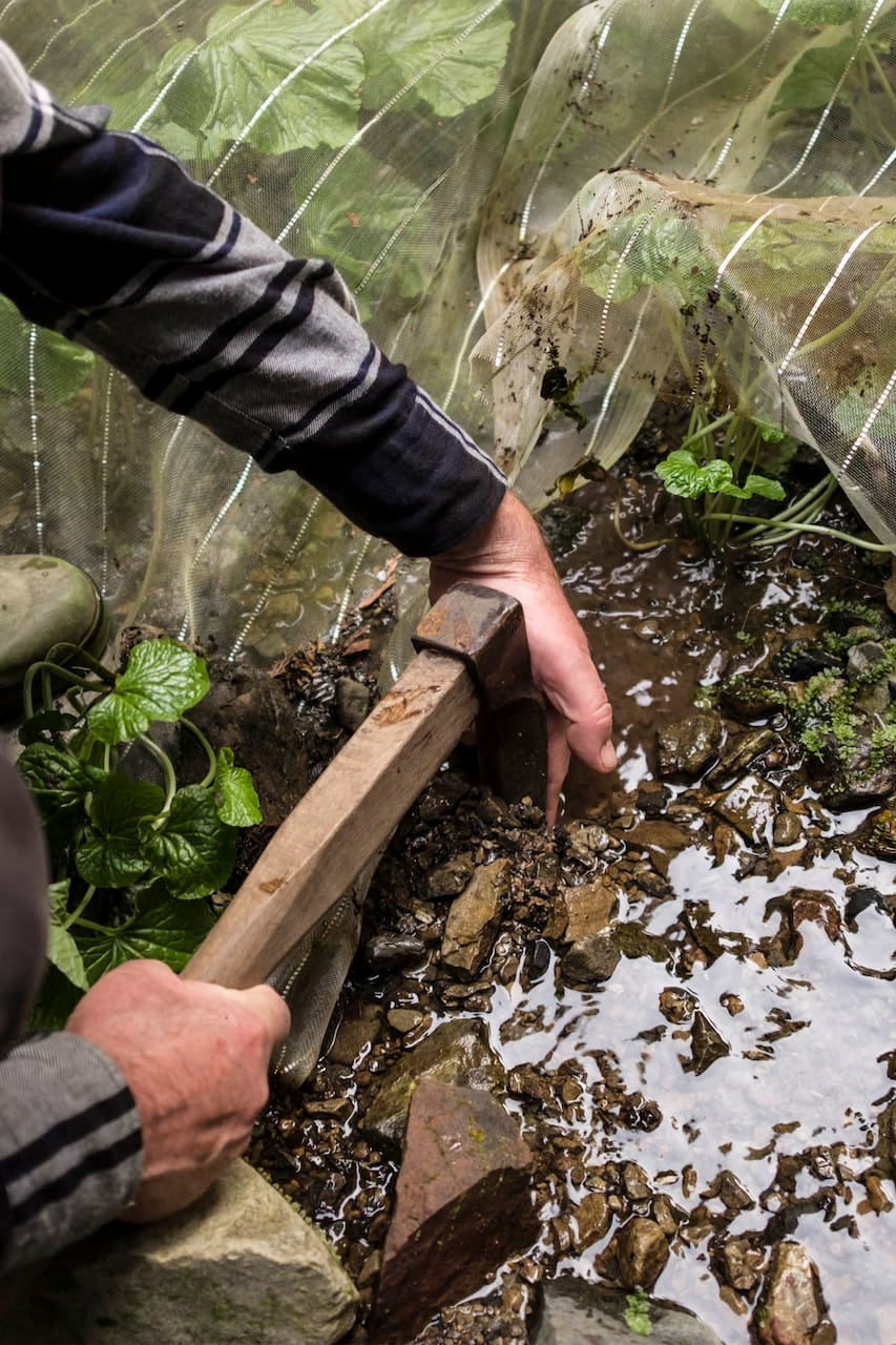 Learn the art of wasabi cultivation