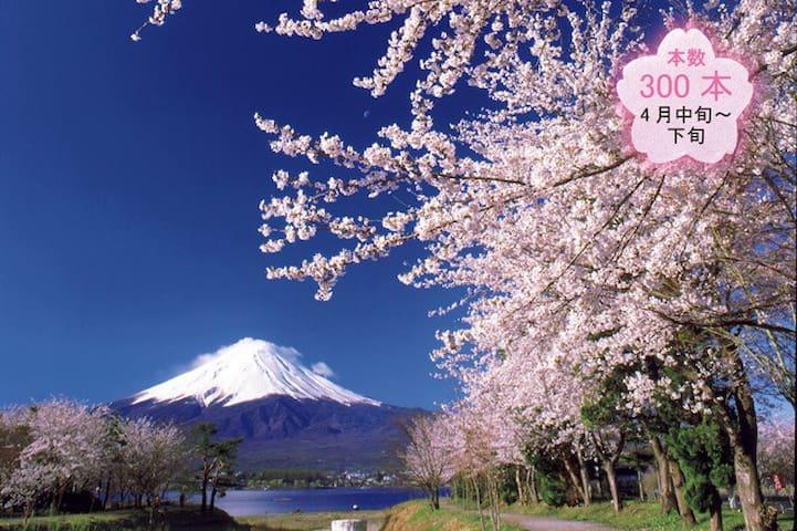 河口湖徒歩10分富士桜満開一軒家 - 南都留郡 - Ház