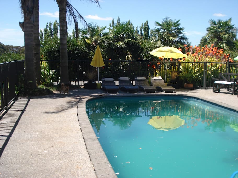 Pool loungers shaded by palm trees