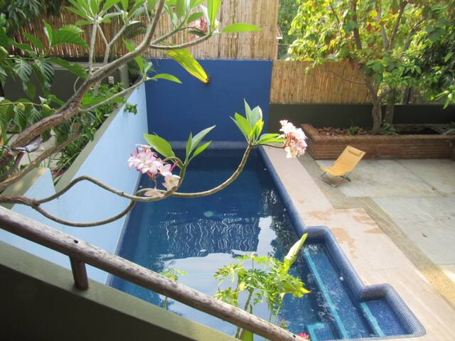 Refreshing shared pool. If you're lucky you'll spot iguanas resting on the fence or in the avocado tree.