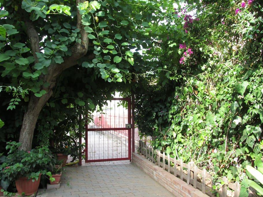 Giardino, entrata