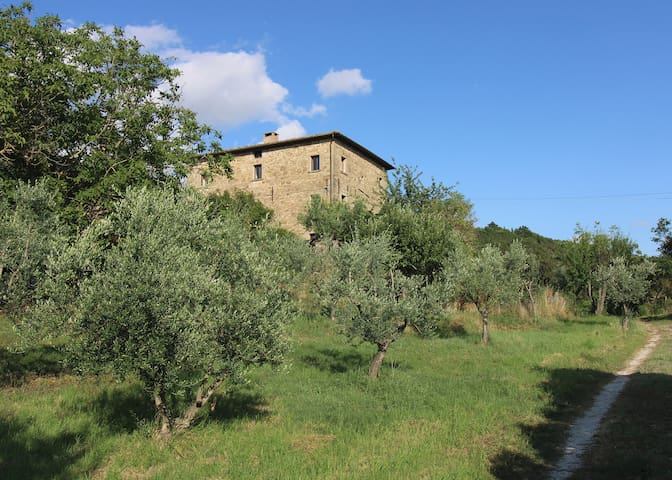 Casa d'Oro seen from the olive orchard