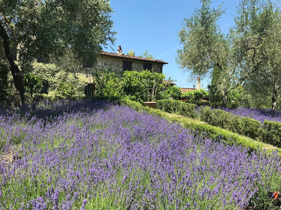 House and lavender field