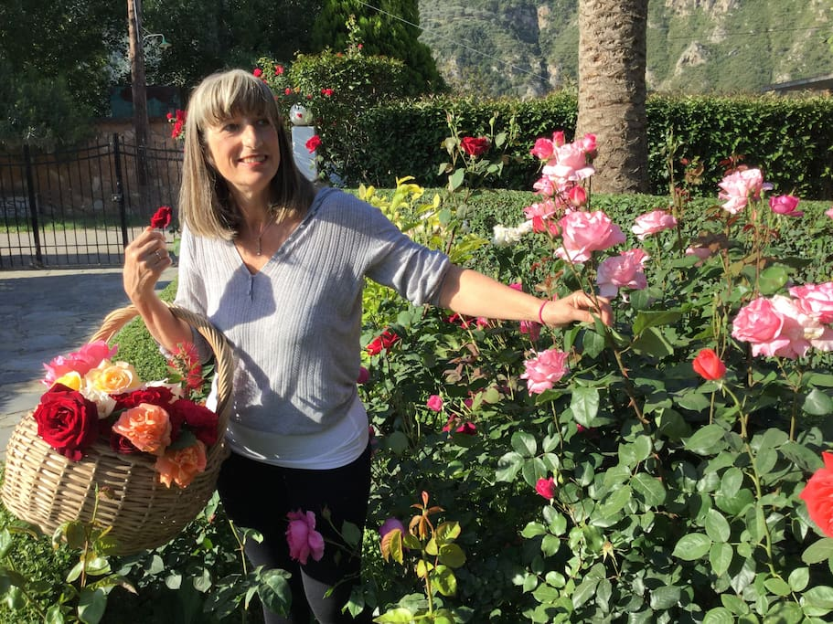 Picking roses at the garden