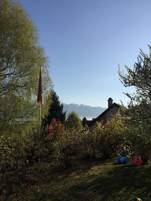 An uplifting morning view of the alps from the garden.