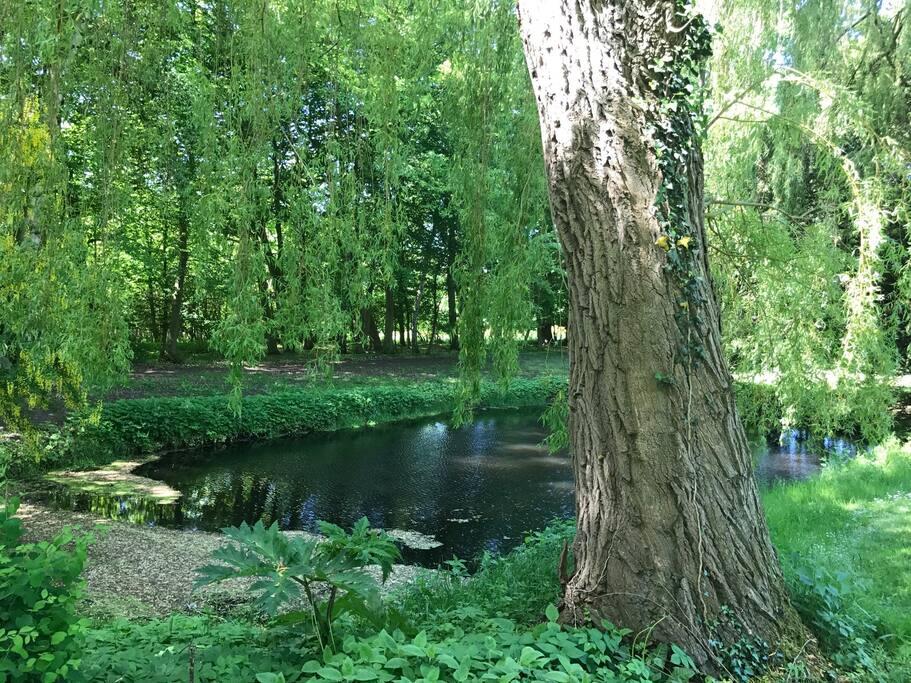 Der Teich im hintern Teil des großen Gartens