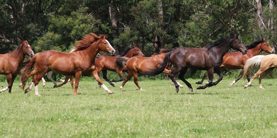 Valhalla Horse Riding and Farm Holidays - Farmstay