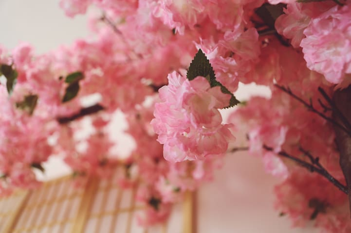 【奈良ならけん】日式和風主题+和服+樱花树  距松花江150米  中央大街400米 网红桥500米