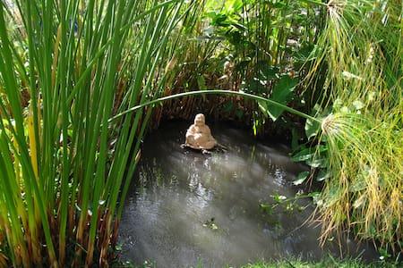 Un Lugar para descansar en medio de la Naturaleza - Tetecalita - Natur-Lodge