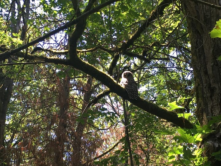 We spotted this owl on our hike.