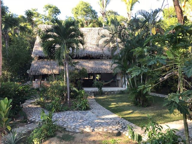 Casa Alegre: Selva