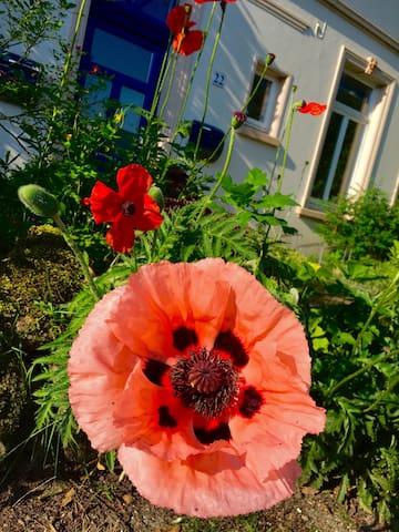 Charmantes Haus, Altbau, für Individualisten