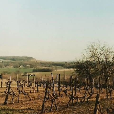Views of the vines