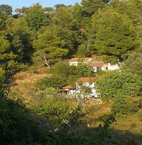 Cottage in wildness of island - Skopelos - 獨棟
