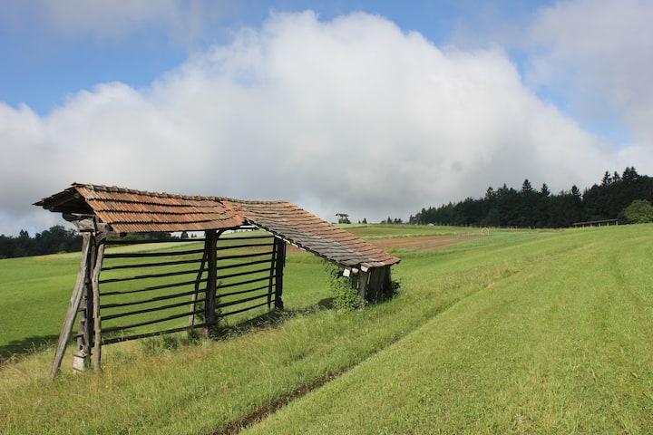 Seeing typical Slovene hayracks