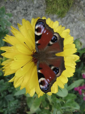 Flowers... butterflies....peace...
