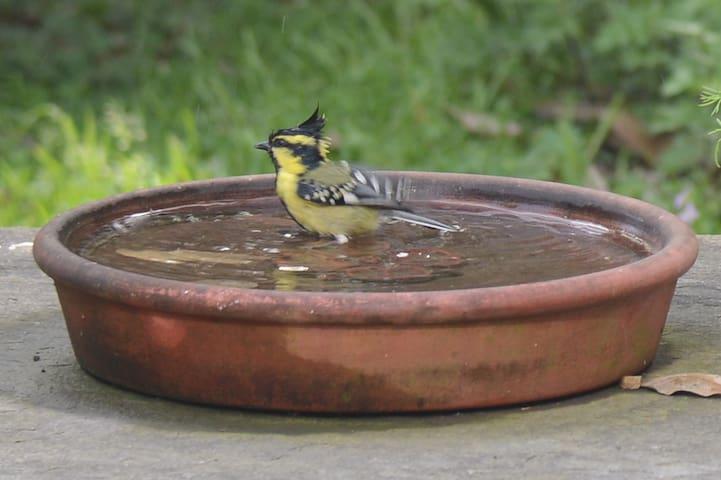Second bird bath in the garden
