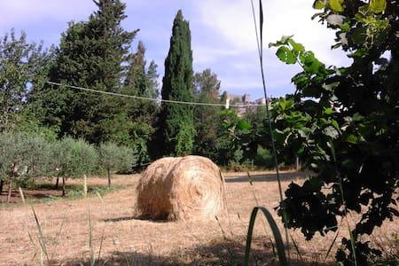 la casa nel vicolo dell'amore - ciciliano