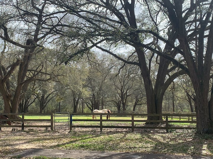 Equestrian haven near horse shows/Folsom