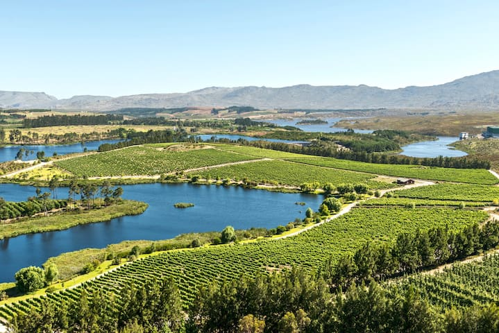 Aerial View of the Vineyards