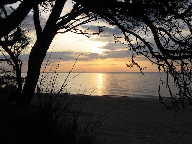 Strandbegegnung