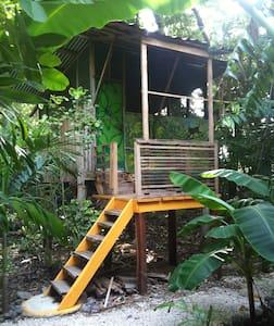 Casa Congo:  live monkey view, sleep in nature. - Nosara - Baumhaus