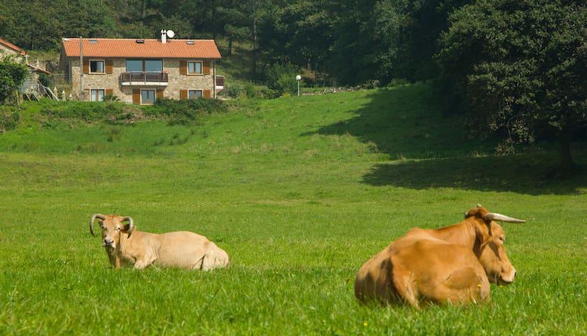 Fontequeiroso- Casa rural - Nemiña - Hus