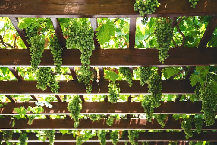 Pergola at Page Springs Cellars