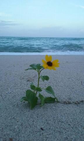 Sunny Beach Hideaway