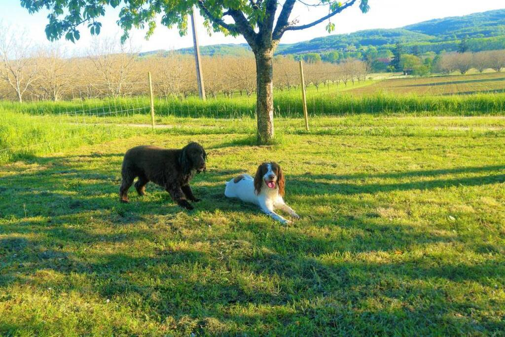 This is Alfie and Dottie! Dogs are most welcome at La Longere
