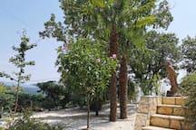 A garden area