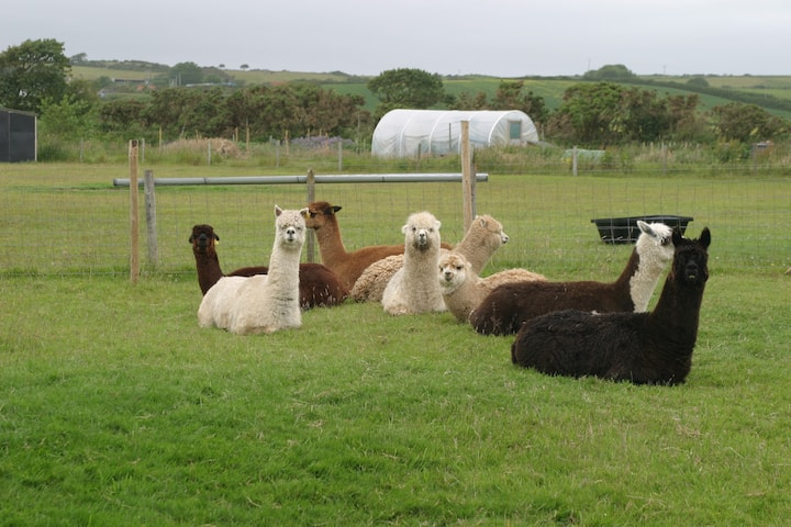 Peaceful one bedroom flat on an alpaca farm.