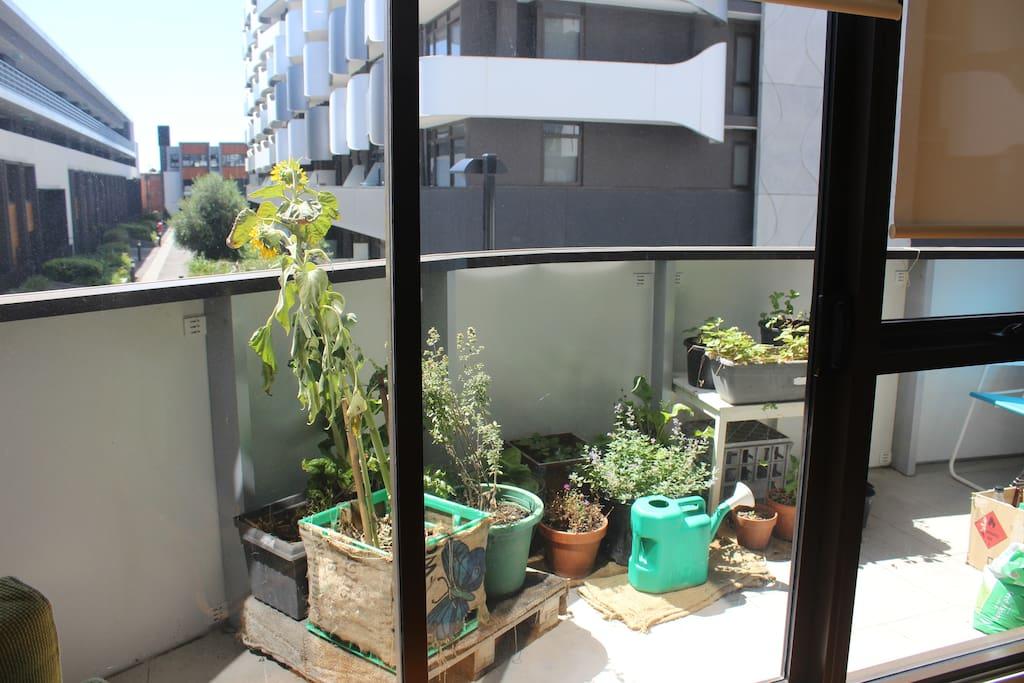 Balcony with veggies and herbs