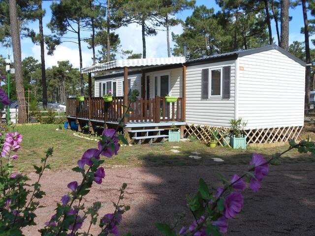Mobil-Home Cottage Gold dans parc   4* BAP