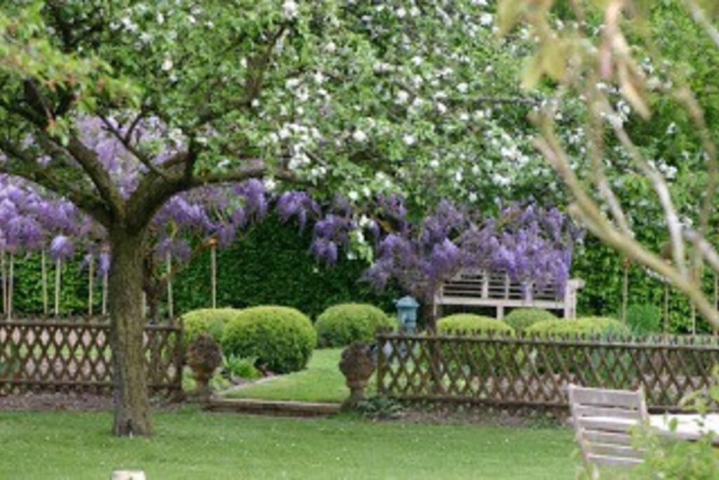 Le jardin en fleur