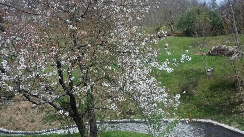 La collina dei ciliegi