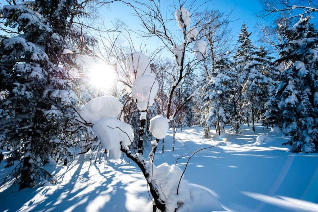 阳光下的雪挂