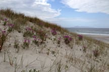 Black swamp beach....km's of unspoilt quiet beach times and fishing...