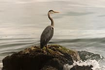My suite is located next to a Heron nesting site. You can watch the herons from a sitting area at the front of the house or walk to the bay and see them in the ocean.