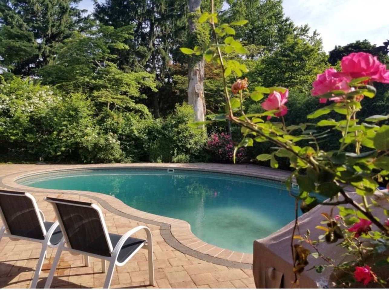 Beautiful quiet private backyard with salt water pool!