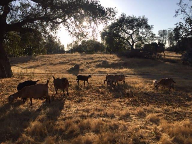 Tierra del Cielo ~ farm cottage