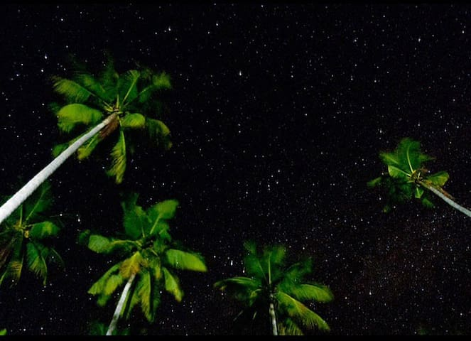 Night sky over coconut trees