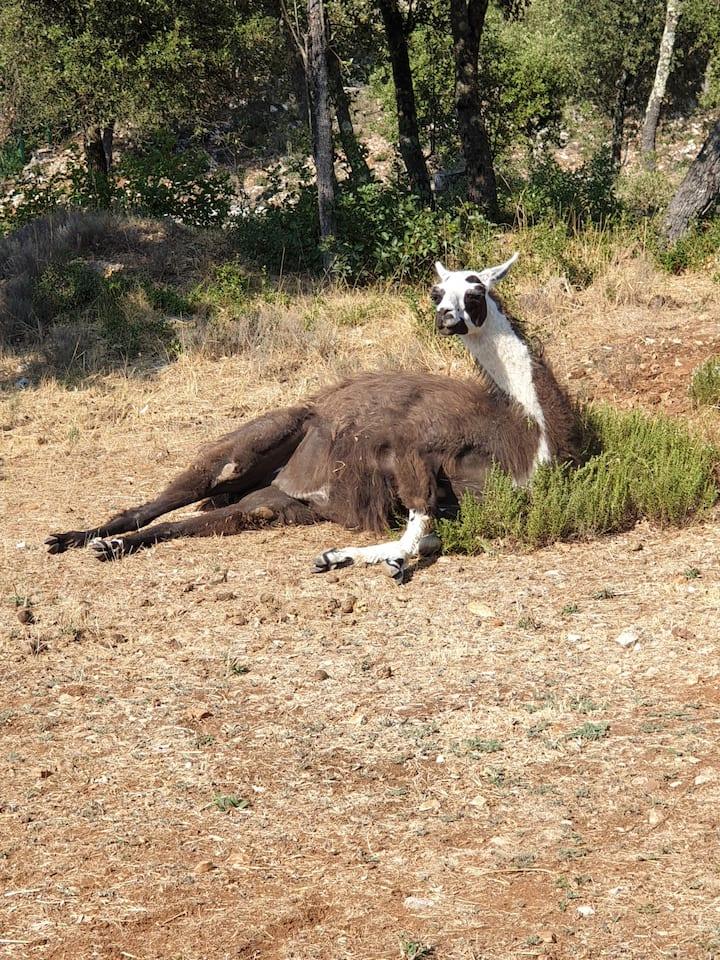 Le Paradis en Provence dans un Parc Animalier
