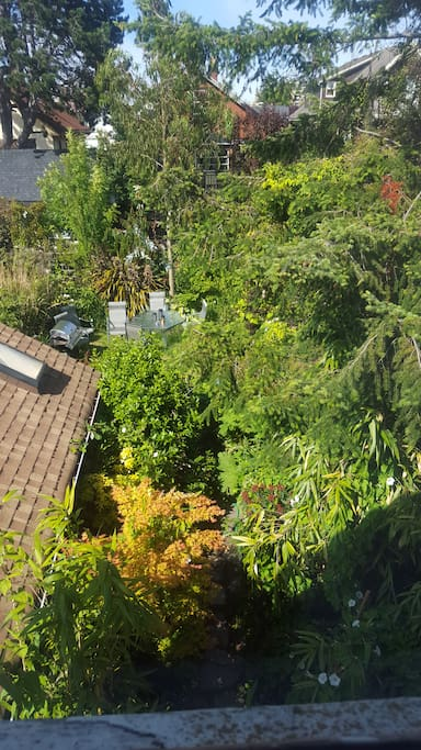 Morning view of the garden from the kitchen cum dining room window.