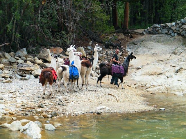 Lightning Ridge Llamas