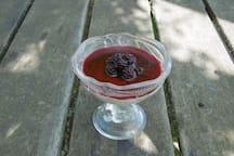 Panacotta with blackberries