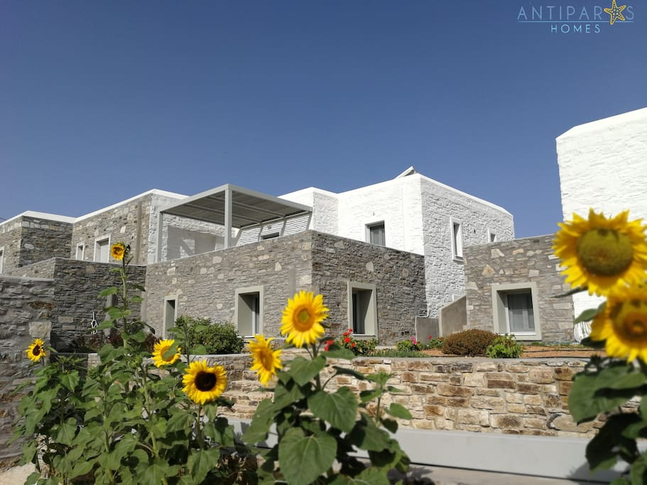 Antiparos Homes is a complex of 5 newly constructed detached Cycladic stone houses for rent in a private property at Sifneikos gyalos, Antiparos.