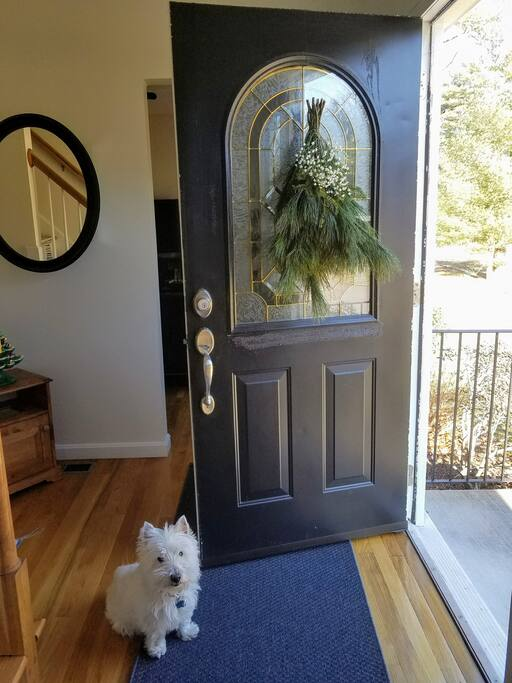 Door Dog Dexter
