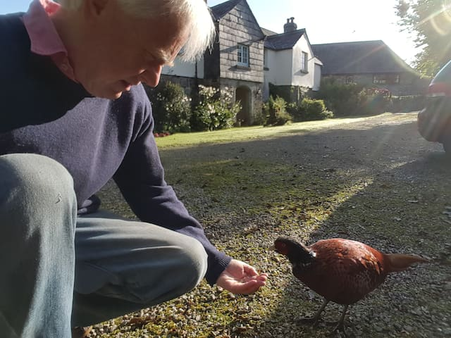 We handfeed wild pheasants. Buzzards, Hawks and Herons are regular visitors to our garden